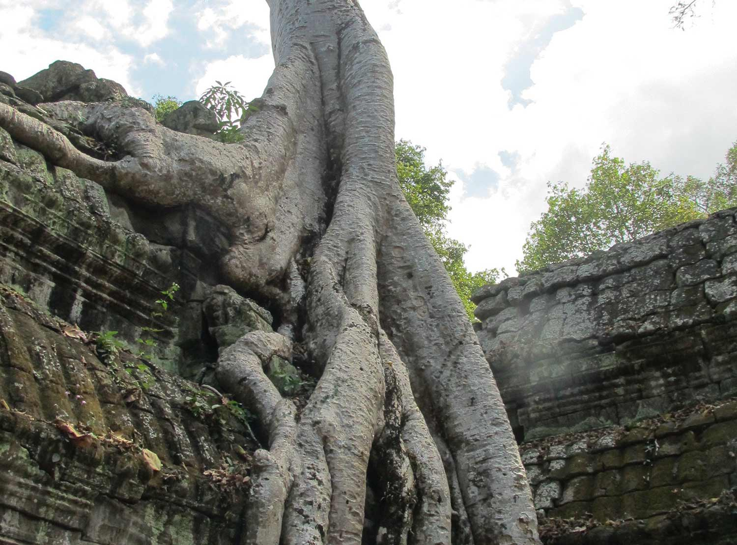 angkortree_1500x1109