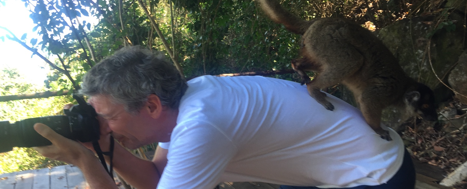 Lemur jumping on the author's back