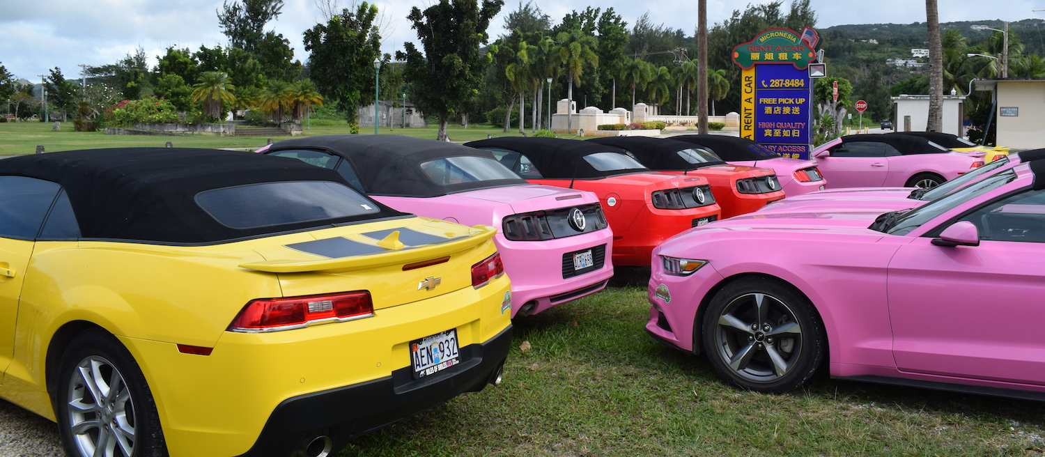Colourful mustangs